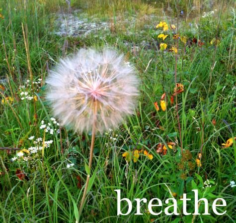 Breathe_seed_paper